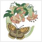 Butterfly Alpha C