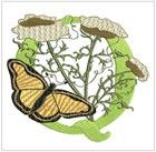 Butterfly Alpha Q