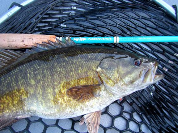 1st Smallmouth on the fly, 4/18/19